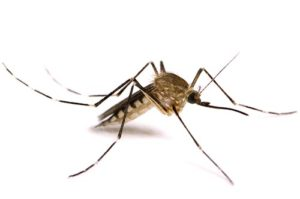 Mosquito Control in McHenry County