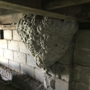 Wasp Nest Found Under Porch