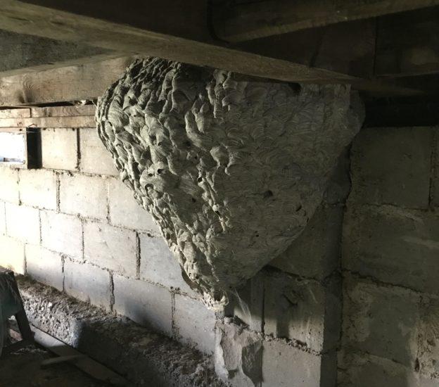 Wasp Nest Found Under Porch
